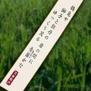 Nazonoyakusou